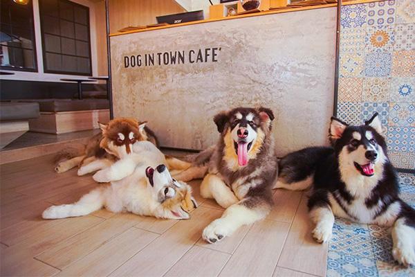 cafedog